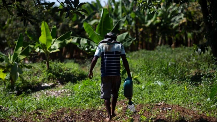 Agricultura orgânica no Brasil - Rebeca Figueiredo Amorim/Getty Images