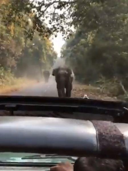 Mulher achou que nada fosse acontecer, mas ficou desesperada quando elefante avançou - Reprodução/Twitter