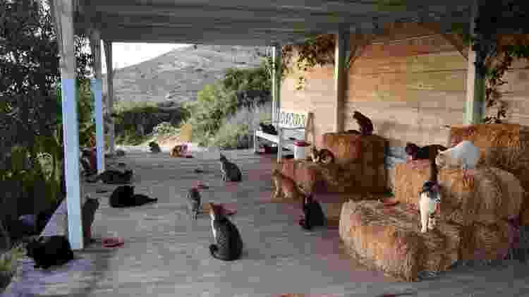 Gatos Grécia - Reprodução/Facebook - Reprodução/Facebook