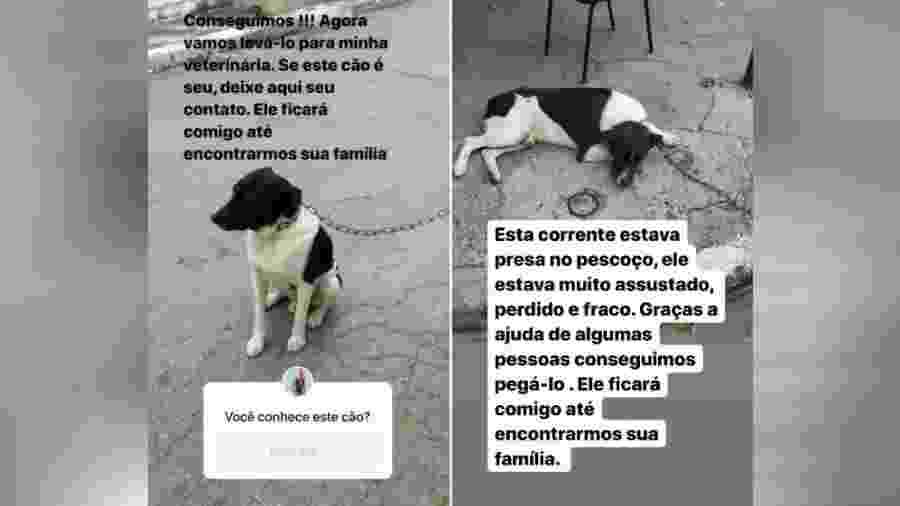 Ana Hickmann se atrasa para o trabalho para resgatar cachorro na rua - reprodução/Instagram