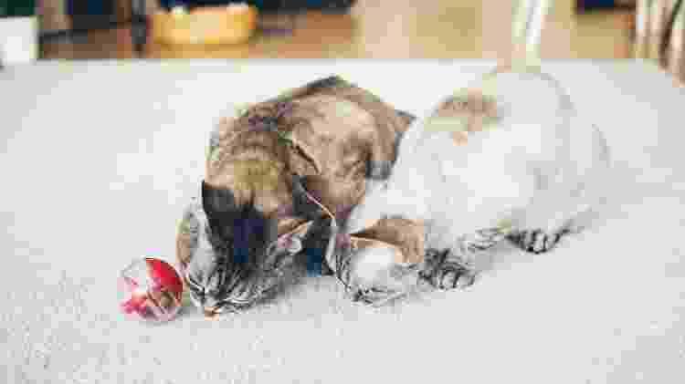 Gatos com brinquedo  - Getty Images/iStock - Getty Images/iStock