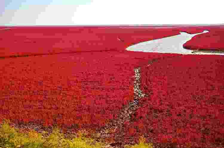 Apesar do nome Praia Vermelha, a atração não está no litoral, mas em uma região pantanosa - Getty Images/iStockphoto - Getty Images/iStockphoto