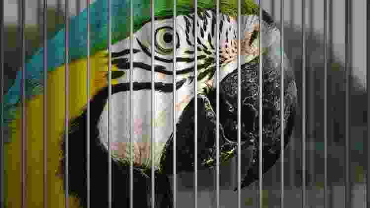 Atente para os procedimentos legais para ter uma ave selvagem em casa - Getty Images/iStockphoto - Getty Images/iStockphoto