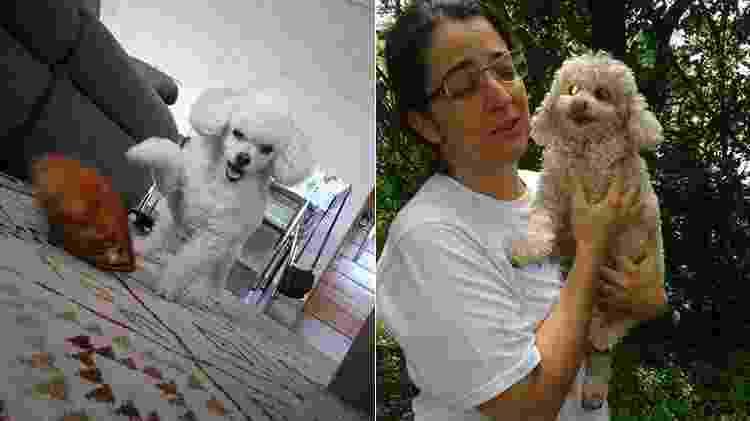 A poodle Kika e o reencontro com a dona após desaparecer por três dias - Arquivo pessoal - Arquivo pessoal