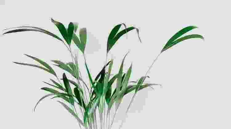 Planta - Reprodução/Unsplash - Reprodução/Unsplash