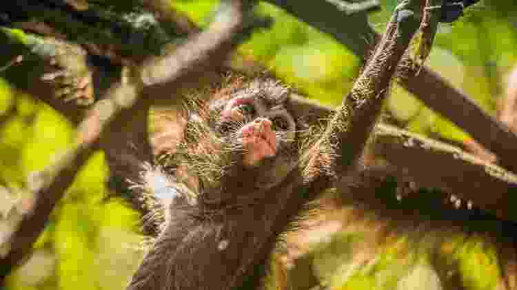 monkeyland - Getty Images - Getty Images