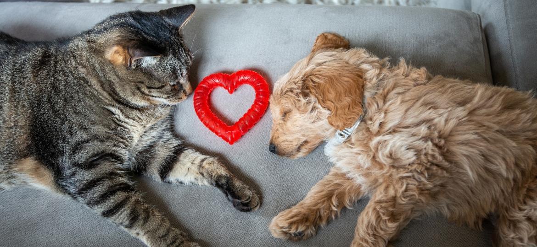 Problemas cardíacos de cães e gatos são bem diferentes que o dos humanos - Getty Images/iStockphoto