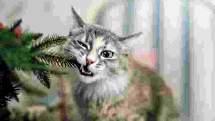 Se seu bichinho comeu o que não devia, procure um veterinário - Getty Images - Getty Images