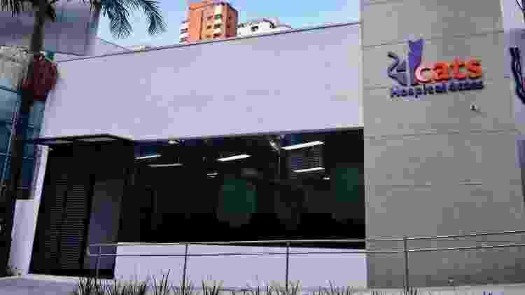 Hospital 4Cats é o primeiro do Brasil voltado ao atendimento exclusivamente de gatos - Divulgação - Divulgação