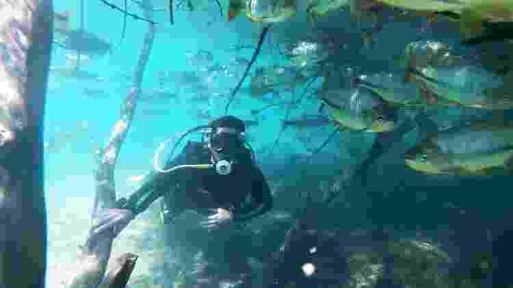 Mergulho com cilindro, no Rio da Prata, em Jardim  - João Gomes/Grupo Rio da Prata - João Gomes/Grupo Rio da Prata