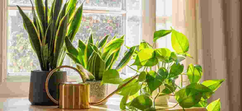 Espada-de-são-jorge e jiboia são plantas que podem te fazer companhia no friozinho (ou calor) do ar-condicionado - Getty Images/iStockphoto