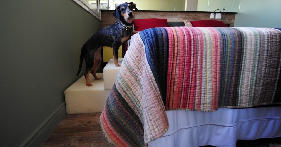 No quarto do casal do apê do Dr. Pet, em São Paulo (SP), há um escadinha para auxiliar os cães a subirem na cama, em especial, Estopinha (foto). Recentemente, a cachorrinha foi diagnosticada com um problema na coluna, por isso, o projeto de decoração incluiu rampas e escadas encostadas às camas e aos sofás