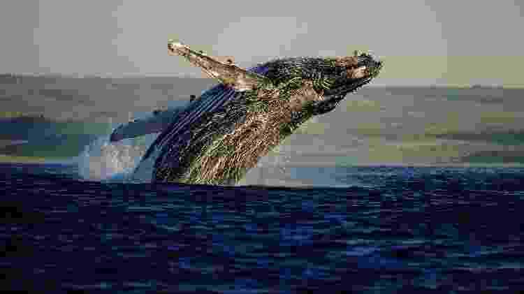 Baleias - South African Tourism/Divulgação - South African Tourism/Divulgação