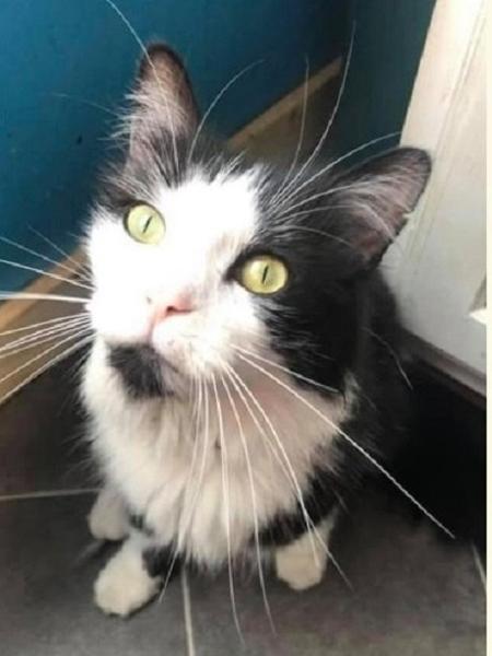 O gato Jordan, da Pensilvânia - Reprodução/Facebook