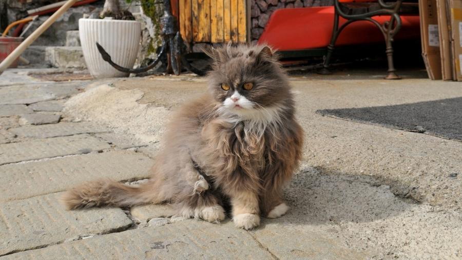 Amantes de felinos vão encontrar uma programação especial na Itália - Getty Images