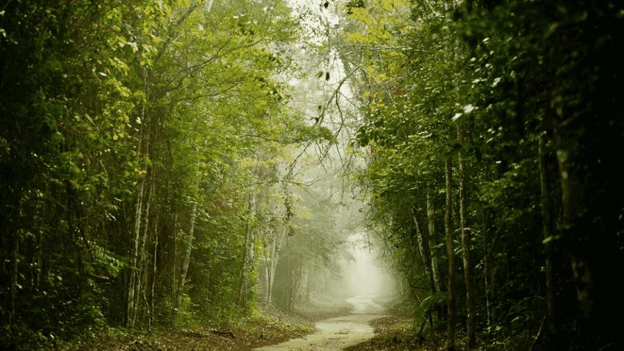 Área de floresta no interior da Reserva Biológica de Sooretama - Leonardo Merçon