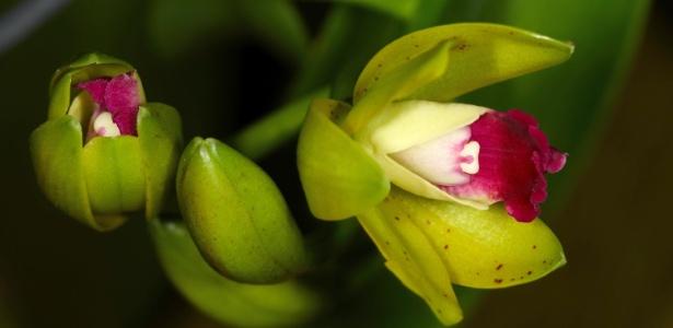 Cuide bem das orquídeas na primavera, quando muitas espécies florescem - Getty Images