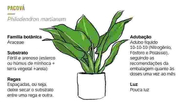Plantados Pacová -  -
