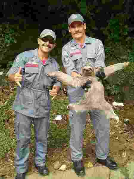 Bicho preguiça capturado em São Sebastião - Reprodução/Facebook