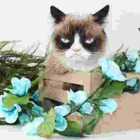 Grumpy Cat - Reprodução/Instagram.com/realgrumpycat