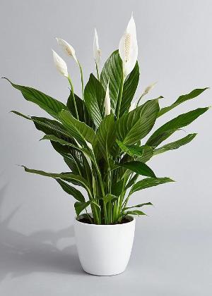 5 plantas resistentes e difíceis de matar para quem não tem o dedo