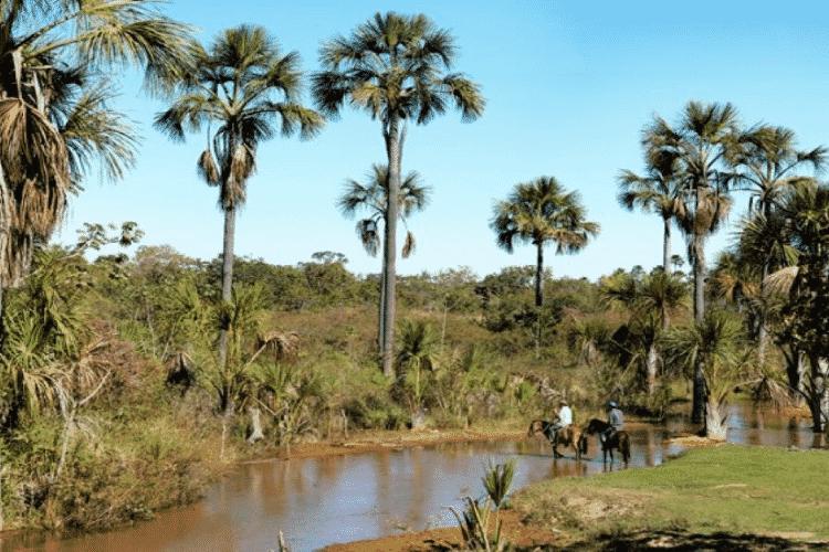 Graças ao Aquífero Urucuia, o oeste baiano é rico em rios e nascentes, marcados pela presença de buritis em suas margens -  Peter Caton/ISPN -  Peter Caton/ISPN
