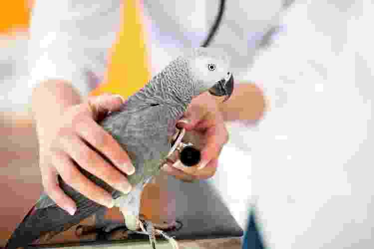 Acompanhamento veterinário é essencial para a saúde de seu pet - Getty Images/iStockphoto - Getty Images/iStockphoto