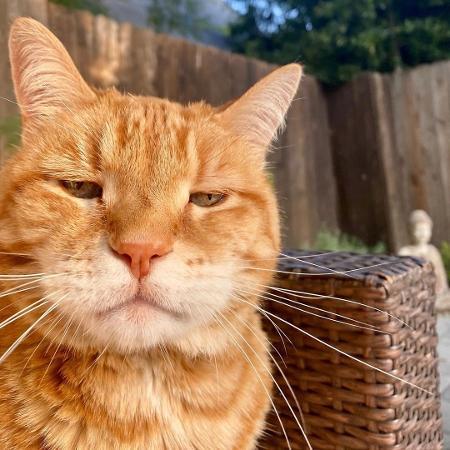 """O gato Marley faz sucesso com sua """"cara de segunda-feira"""" - Reprodução/Instagram"""