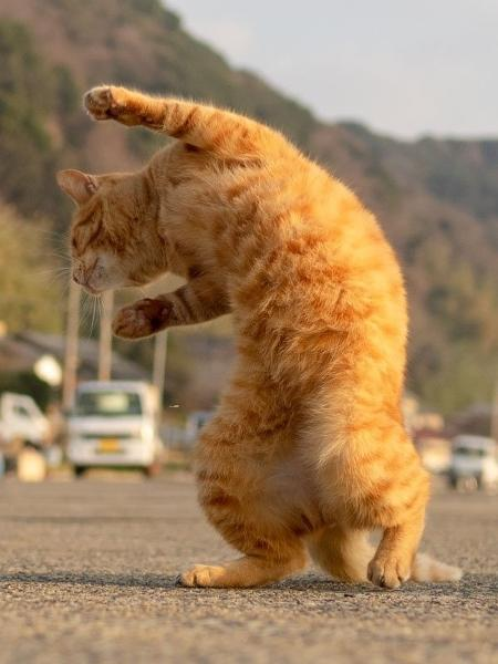 Gatos dançando  - Reprodução/Twitter/HisakataHiroyuki