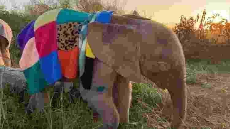 Khanyisa, a elefanta albino - Reprodução Herd - Reprodução Herd