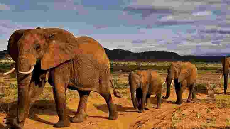 Um dos internautas prefriu colocá-lo em uma manada de elefantes - Reprodução/Reddit - Reprodução/Reddit