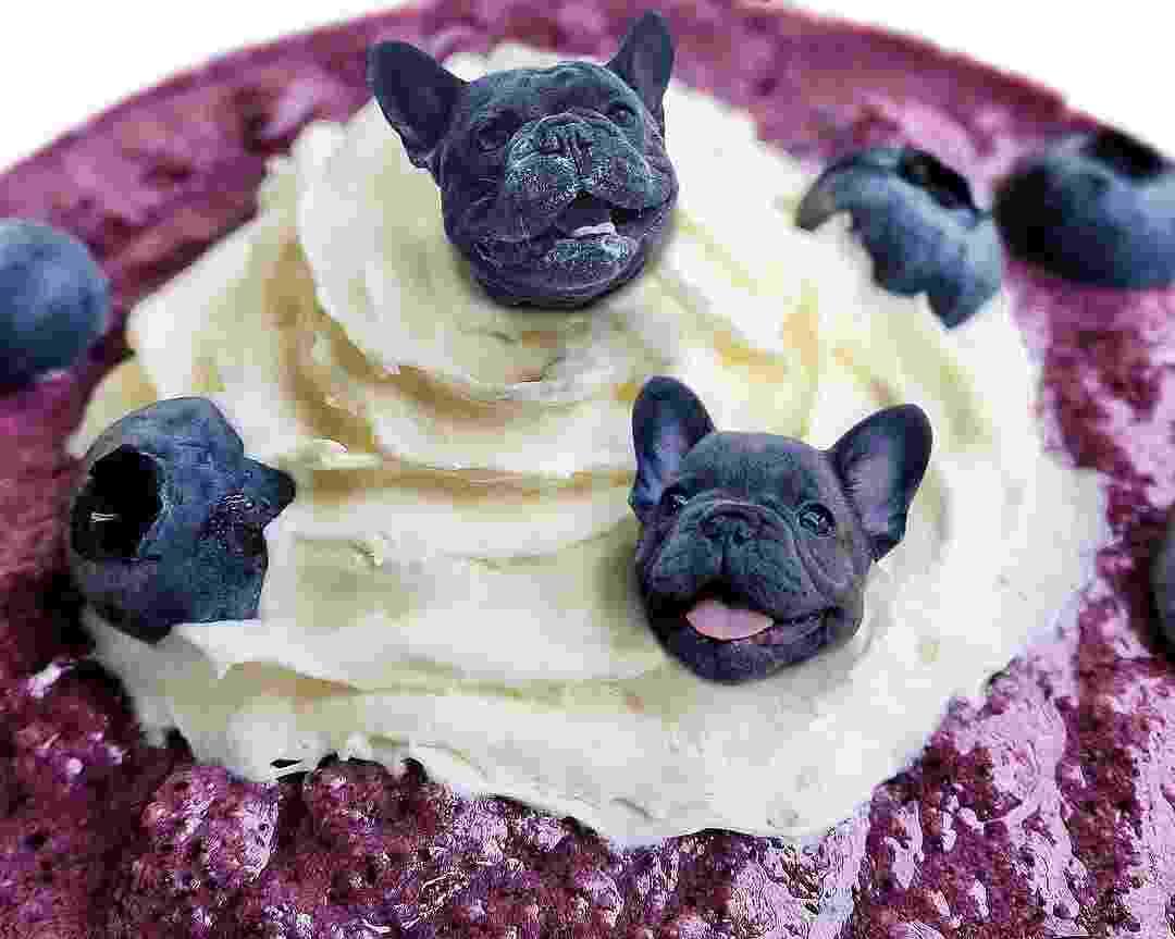 Cachorros e comida - @dogs_infood