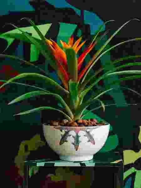 tropicalista bowl - @takeuchiss/Divulgação - @takeuchiss/Divulgação
