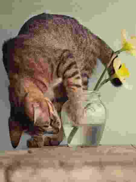 Evitar plantas tóxicas é o primeiro passo, mas há mais truques para manter essa convivência - Getty Images - Getty Images