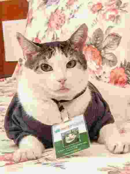 """O gato """"gerente"""" Athos - Arquivo pessoal"""