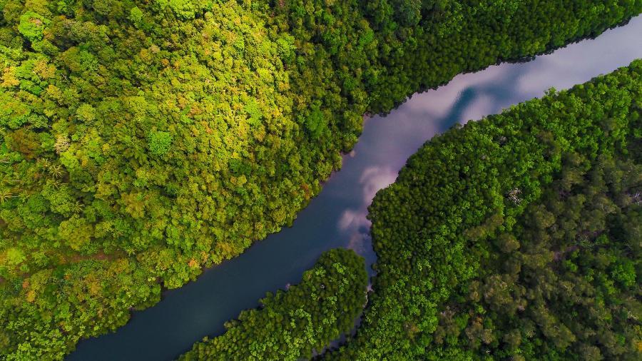 Ricardo Salles anulou regras de preservação ambiental em áreas como manguezais e restingas - Getty Images/iStockphoto