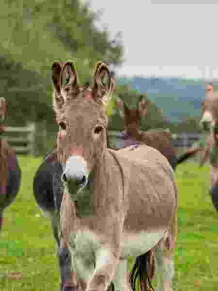 The Donkey Sanctuary, no Reino Unido, resgata jumentos que podem ser adotados e acompanhados por câmeras - Reprodução/The Donkey Sanctuary - Reprodução/The Donkey Sanctuary