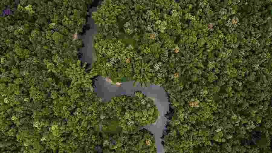 Trecho de floresta brasileira - iStockphoto