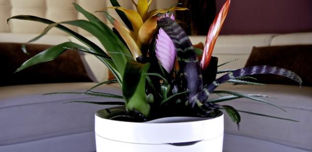 O vaso Pot tem sensores que liberam a água retida conforme a necessidade da espécie - Divulgação/ Parrot
