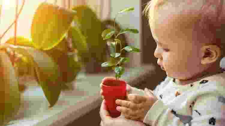 Plantados criança - iStock - iStock