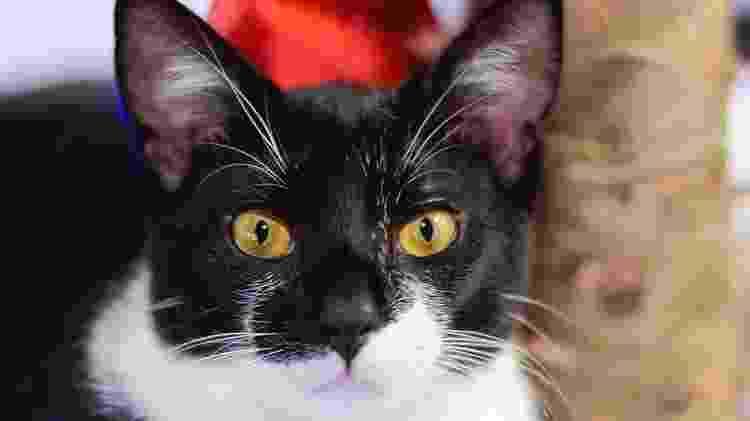 Dobby, o gato que gerou polêmica com Viih Tube do 'BBB 21' - Instagram/Reprodução - Instagram/Reprodução