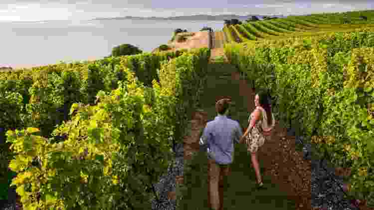 Vinícolas de Marlborough, na Nova Zelândia - Mike Heydon/Tourism New Zealand - Mike Heydon/Tourism New Zealand