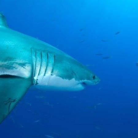 O fotógrafo quer mostrar a beleza dos predadores subaquáticos - Amos Nachoum/BBC