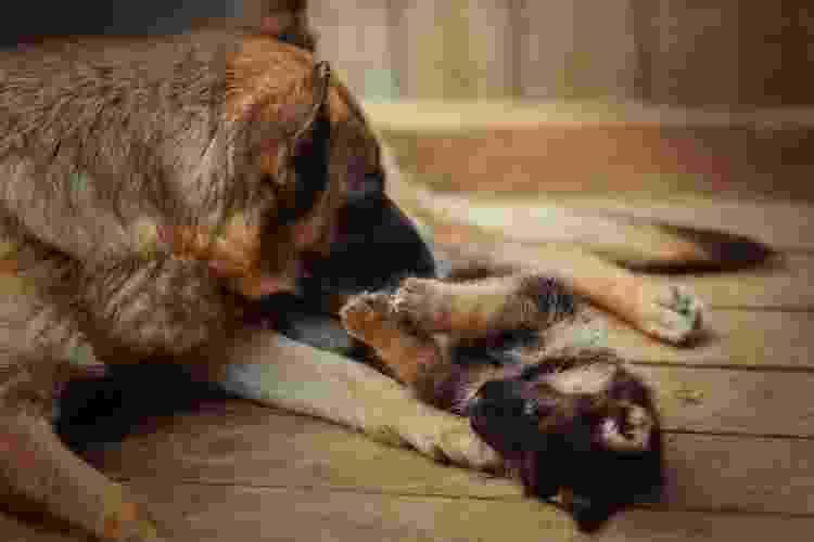 Em cães, feromônio sintético remete ao odor da mãe - Getty Images/iStockphoto - Getty Images/iStockphoto