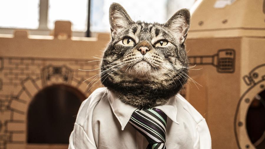 """Popstar do perfil Cansei de Ser Gato, Chico é o inspirador e """"CEO"""" da marca homônima de acessórios para felinos  - Fernando Moraes/UOL"""