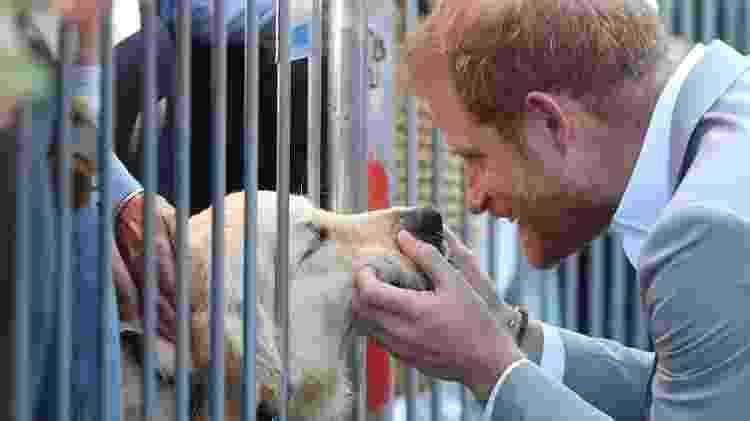 Príncipe Harry dá carinho a cão - Getty Images - Getty Images