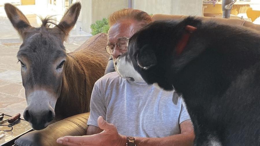 Arnold Schwarzenegger posa com burro e cachorro - Reprodução / Instagram