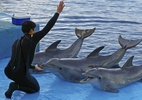 Rerprodução/World Animal Protection Brasil