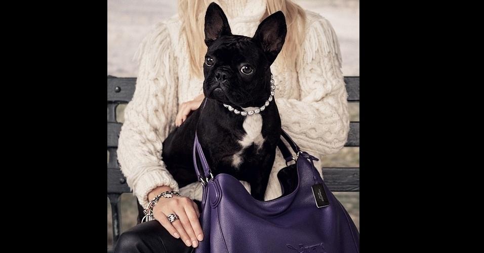 23.jun.2015 - Miss Asia Kinney, a buldogue francês de Lady Gaga, estrelou sua primeira campanha de moda para uma marca de bolsas.