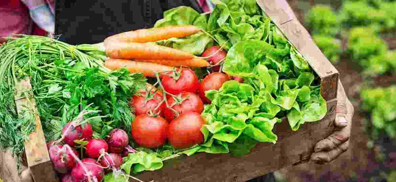 Cesta de alimentos orgânicos - Getty Images